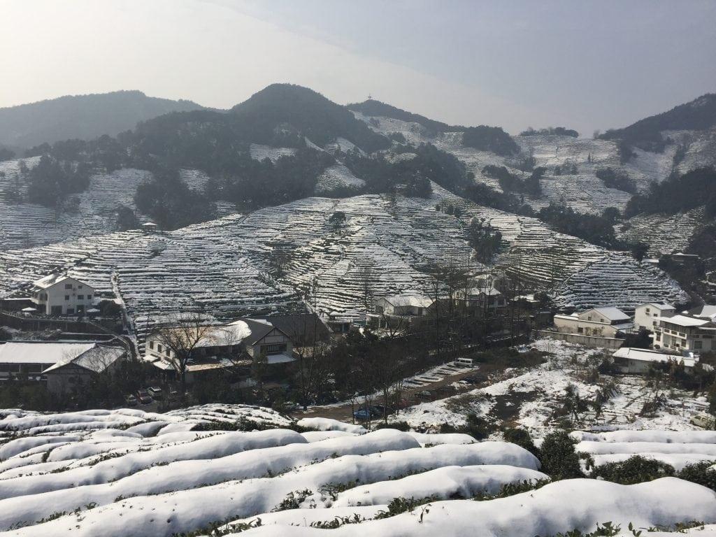 campos de te en Hangzhou